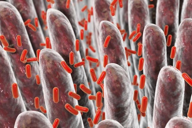 In the future, targets of drug development may be within the microbiome.