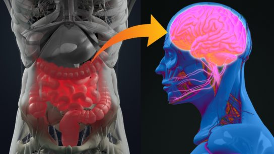 illustration of a gut and someone's brain