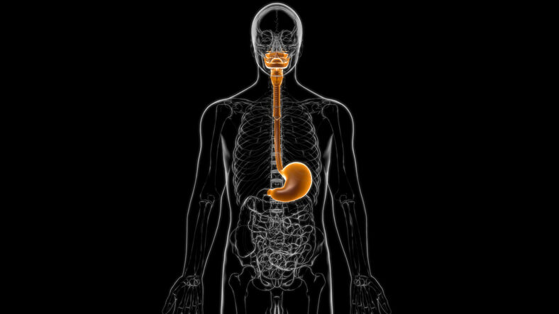 X-ray of human digestive system.